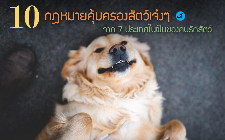 10 กฎหมายคุ้มครองสัตว์เจ๋งๆ จาก 7 ประเทศในฝันของคนรักสัตว์