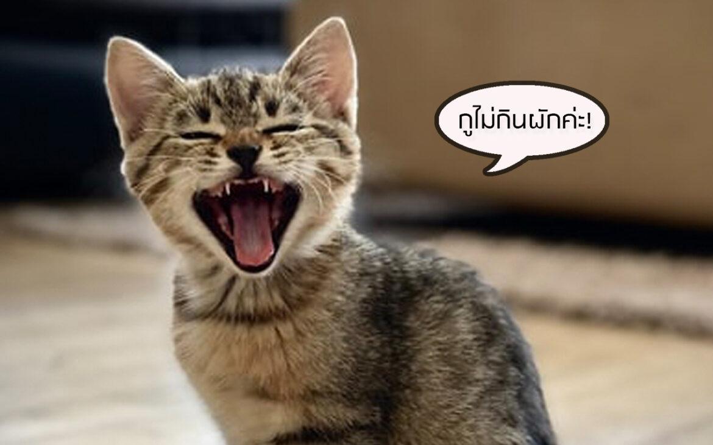 """สติค่ะ! ทาสแมวสายบุญต้องรู้… การบังคับ """"แมว"""" กิน """"มังสวิรัติ"""" เท่ากับการฆ่าน้องทางอ้อม และเป็นเรื่องผิดกฎหมายใน ประเทศอังกฤษ"""